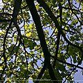 Dans mon jardin / octobre 2017