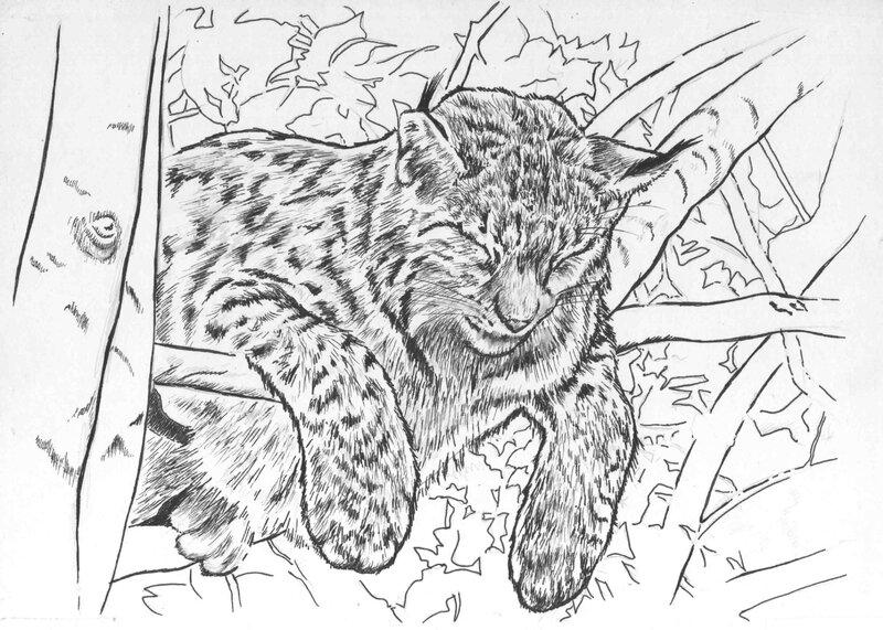 lynx boréal dans un arbre