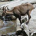 Le zoo du bois du petit chateau à la chaux de fonds (suisse)
