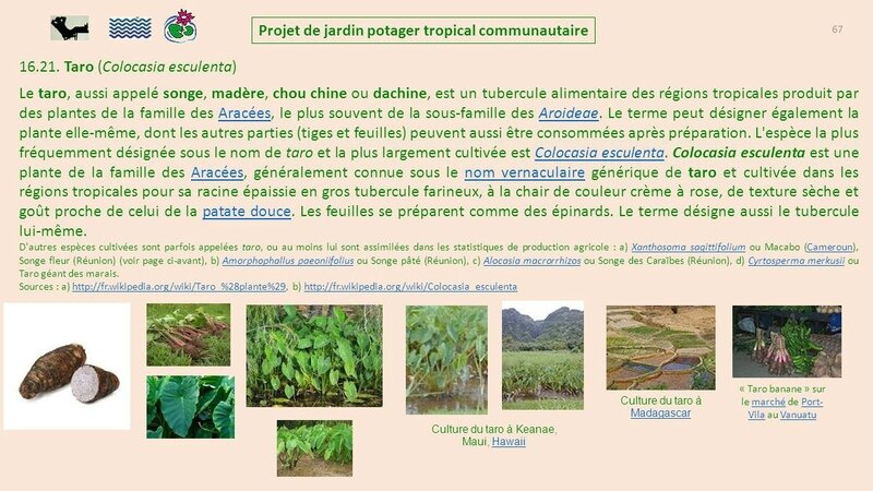 Projet+de+jardin+potager+tropical+communautaire