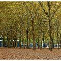 l'automne sur la place des quinconces