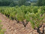 21_Galets_roules__Chateauneuf_du_Pape