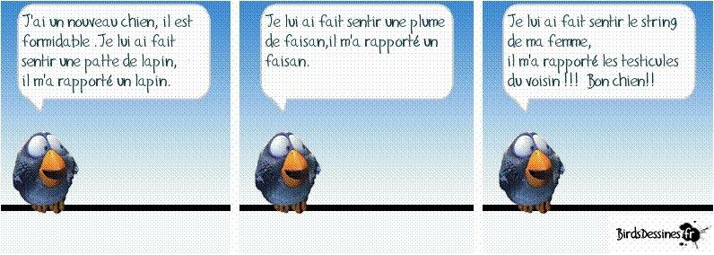 oiseaux 06