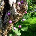 collier raisin 2