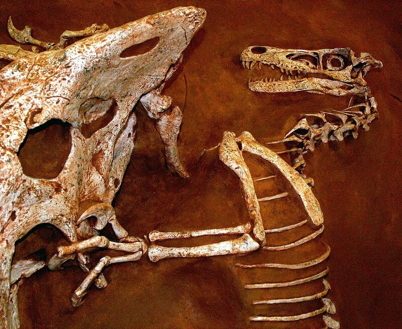 1024px-Velociraptor_and_Protoceratops_-_Fighting_dinosaurs