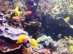 poissons_couleurs