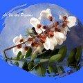 Beignets de fleur d'acacia