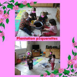 photocollageplantation paquerette