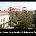 Saint-chamond, la ville où les corbeaux sont les maîtres
