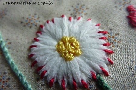 Paquerettes Gipsy (1)