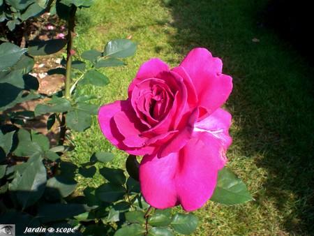 59_Roseraie_Blois