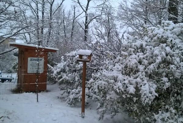 neige 18 dec 2017 cliché 02