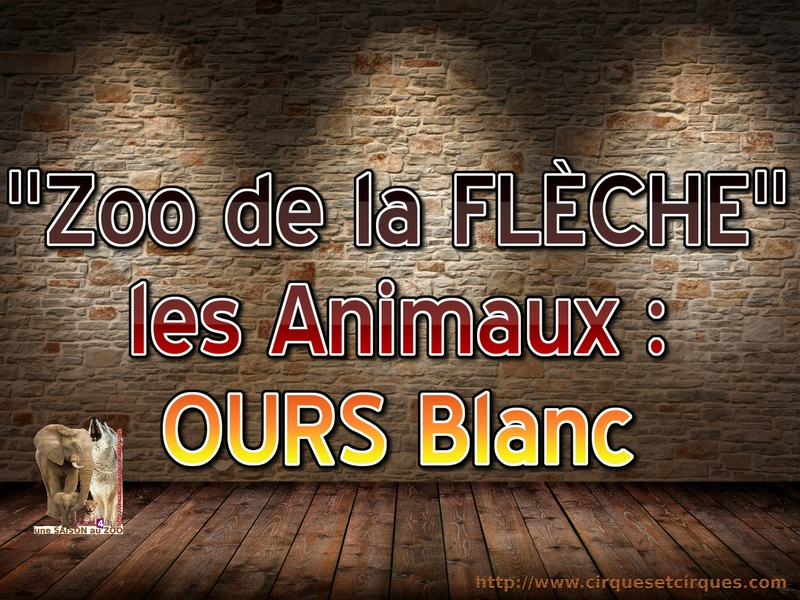 - ANiMAUX OURS BLANC