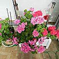 Fleurs juin 2012