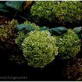 couleurs d'automne (fleurs & plantes) (8)