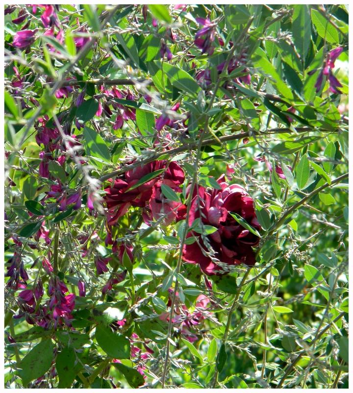 R tro septembre 2015 le jardin par passion for Jardin passion la rochelle 2015