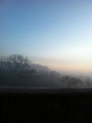 frostedmorning