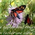 Mes images ont attiré deux entomologiste de ma