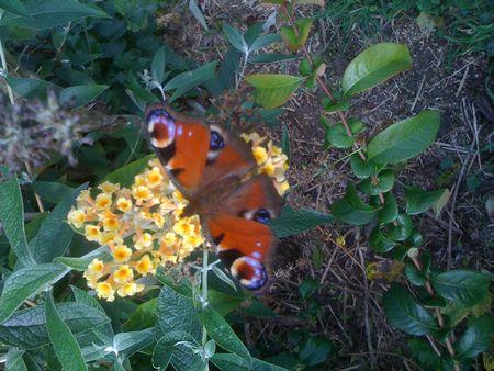 papillons 008