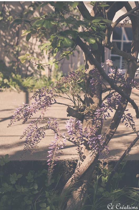 fleurs_jardin-11