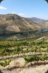 Symington-Graham-Porto-Douro-56_thumb[1]