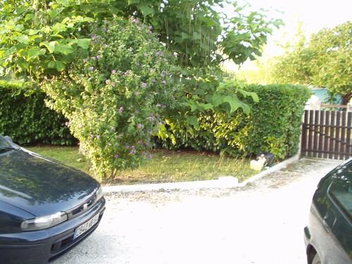 vue de la cour gravillonn e cot nord vers le portail photo de maison sainte helene location. Black Bedroom Furniture Sets. Home Design Ideas