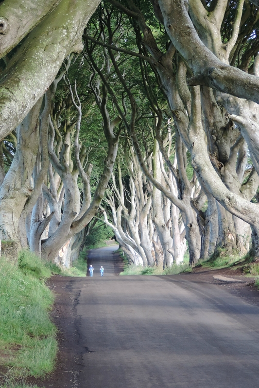 DarkHedges (27)