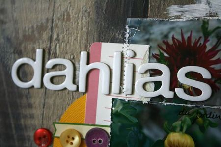 Les dahlias du jardin détail 1