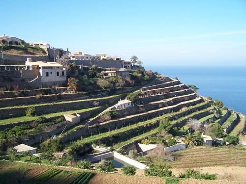 Côte Ouest-cultures en terrasses zoomées