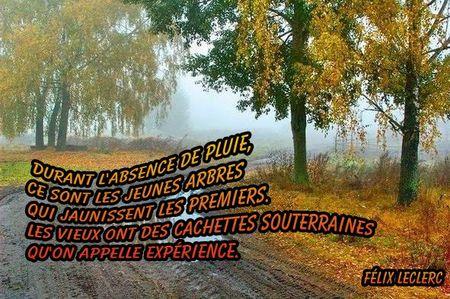 pluie_citation__9_