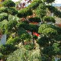 plantes en fête 0230021