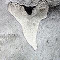 coeur arbre_5301