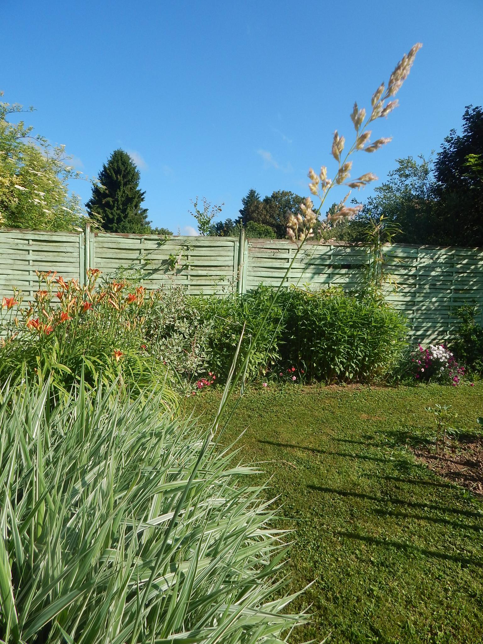 A propos du phalaris les jardins de la cat 39 s house for A propos du jardin