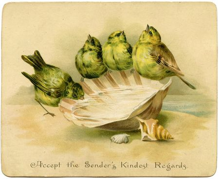Birds-Seashellvintage-GraphicsFairy