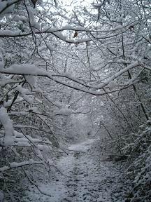 Sentier neige OK