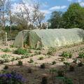 2008 07 18 Une partie du jardin