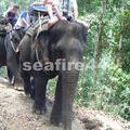 phang nga_sealand park_trekking éléphant_10