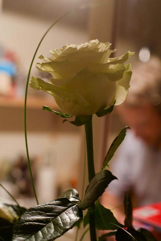 ma rose de Noël 2 - 1