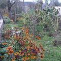2008 10 24 Voici une grande partie de mon jardin