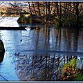 Pellicule de glace sur Lac 2
