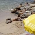 Reve d'été...