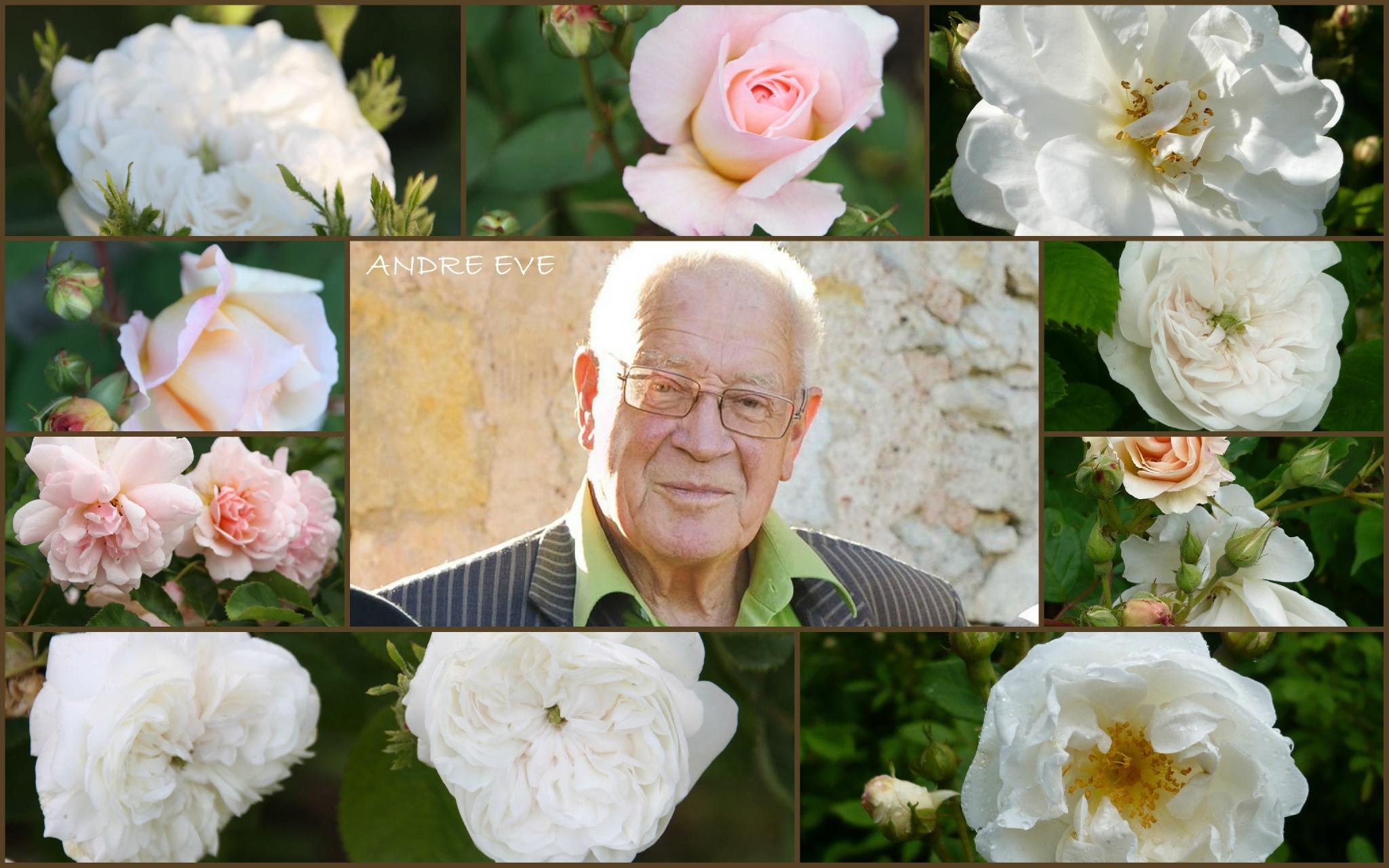 ROSES Mon Jardin