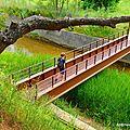 Pont dynamite (Paulilles, mai 2013)