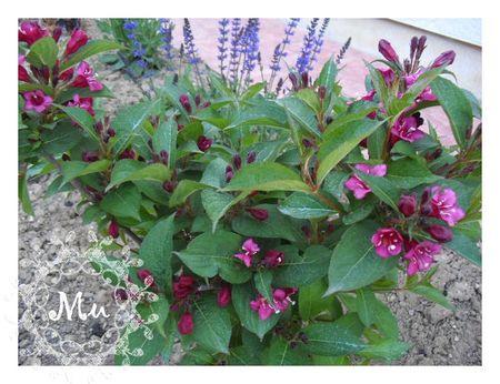 jardin lu 060513 (3)