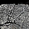 2017-Sous les toits+de noir