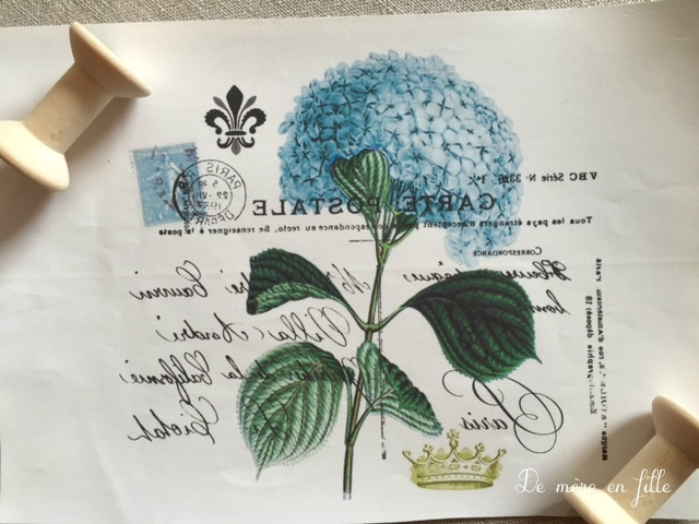 hortensia bleu 2