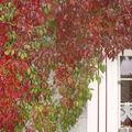 côté automne