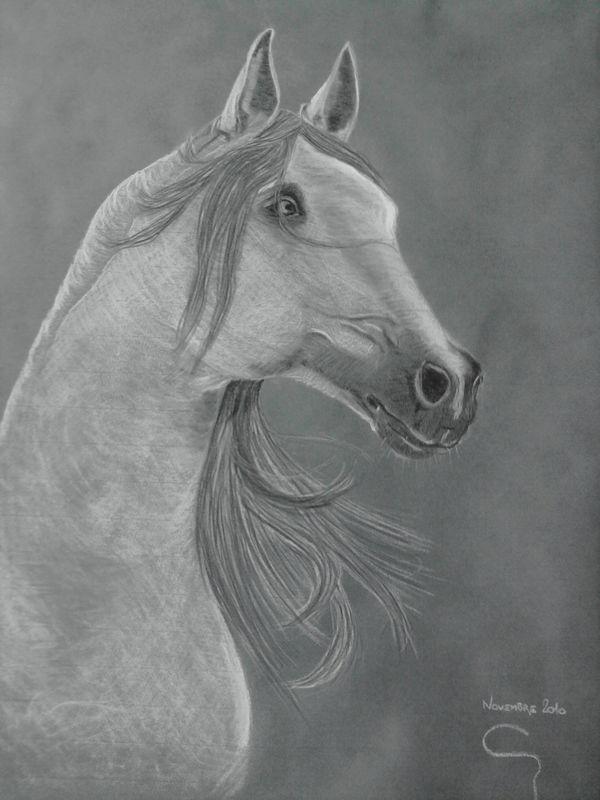 Tête cheval (noir et blanc)