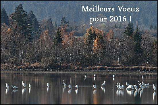 VOEUX_2016