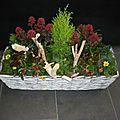 Composition de plantes exterieures